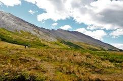 Трек к гуанако Cerro в Огненной Земле Стоковые Изображения