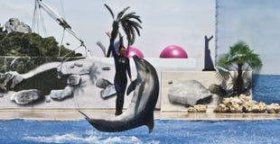 тренер дельфина Стоковые Изображения RF