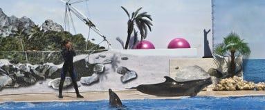 тренер дельфина Стоковые Изображения