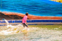 Тренер едет выставки дельфина в бассейне Стоковая Фотография RF