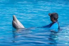 Тренер играя с дельфином в бассейне Стоковое Изображение RF