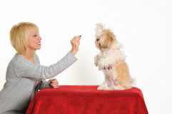тренер собаки Стоковое фото RF