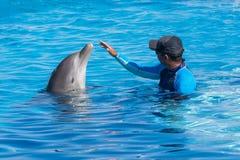 Тренер тренируя дельфина в бассейне Стоковая Фотография