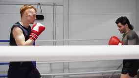 Тренировать экономно боксеров бойцов в перчатках бокса на ringside в клубе боя видеоматериал