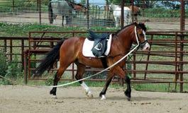 тренировка лошади Стоковая Фотография RF