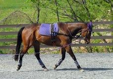 тренировка лошади Стоковое Изображение RF