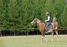 тренировка лошади Стоковое Фото