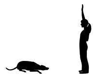 тренировка повиновению собаки Стоковое Изображение RF