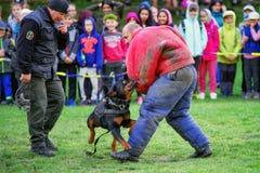 Тренировка полицейской собаки Стоковые Изображения