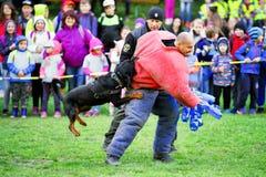 Тренировка полицейской собаки Стоковые Изображения RF