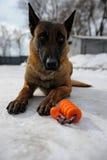 Тренировка полицейской собаки Стоковое Фото