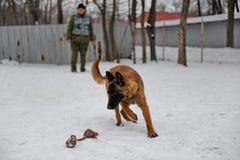 Тренировка полицейской собаки Стоковое фото RF