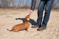 Тренировка собаки - вознаграждение стоковое фото rf