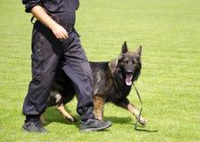 Тренировка собаки Стоковые Изображения RF