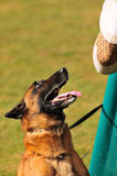Тренировка собаки Стоковая Фотография RF