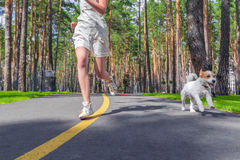Тренировка спорта с собакой Стоковая Фотография RF