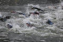Тренировка спорта triathletes заплывания триатлона здоровая стоковая фотография