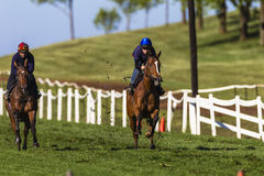 Тренировка спринта лошадей жокеев   Стоковое Изображение