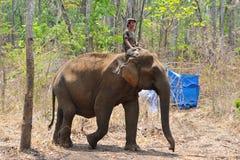 Тренировка слона, святилище Стоковые Фото