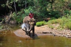 Тренировка слона, святилище Стоковая Фотография