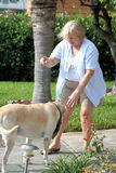 тренировка 02 собак Стоковые Фото