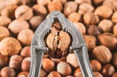 Трескать грецкий орех стоковое фото