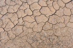 треская земли Стоковые Фото