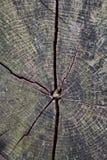 треснутая древесина текстуры зерна Стоковое Изображение