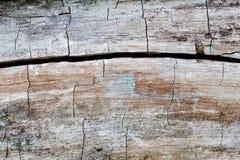 Треснутая деревянная поверхность Текстурированный твёрдой древесиной взгляд макроса предпосылки картины Стоковая Фотография
