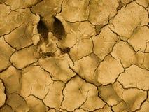 треснутая земля следа ноги Стоковые Фото