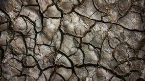 треснутая земля Стоковое фото RF