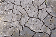 треснутая земля Стоковые Фотографии RF