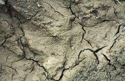 Треснутая земля с грязью Стоковая Фотография