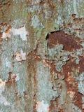 треснутая краска Стоковые Фото