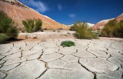 Треснутая почва в пустыне с заводами и горами стоковая фотография