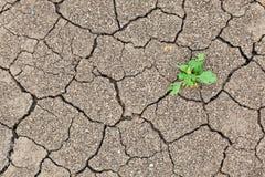 треснутая почва завода роста малая Стоковая Фотография RF