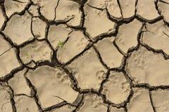 Треснутая почва засухи тинная Концепция экологической катастрофы Стоковая Фотография RF