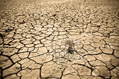 Треснутая почва пустыни Стоковая Фотография