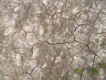 Треснутая почва с малыми кустами живущей травы Стоковые Изображения