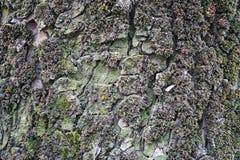 Треснутая расшива старого дерева Стоковые Изображения RF