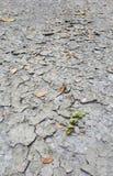 Треснутая серая текстура почвы Стоковые Изображения