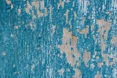Треснутая старая краска на деревянных планках bluets стоковые фотографии rf