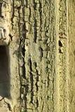 треснутая старая древесина текстуры Стоковые Изображения