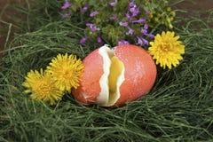 Треснутое пасхальное яйцо Стоковые Фото