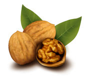 треснутые грецкие орехи грецкого ореха иллюстрация штока