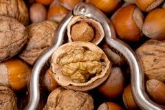 Треснутые грецкий орех и фундук внутри серебряного Щелкунчика Стоковая Фотография