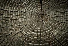 треснутые старые кольца деревянные Стоковые Фото