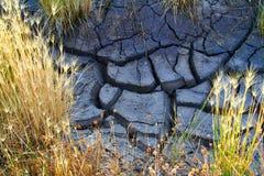 Треснутые сухие грязь и трава пустыни стоковые изображения rf