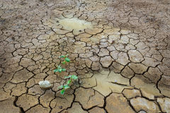 треснутый высушенный завод грязи Стоковые Изображения RF