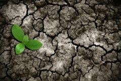 треснутый поднимать травы земной Стоковые Фото